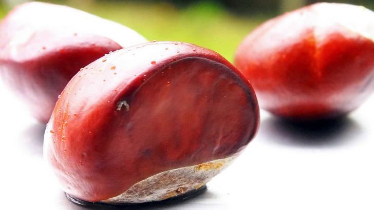 marron-d-inde hemorroide